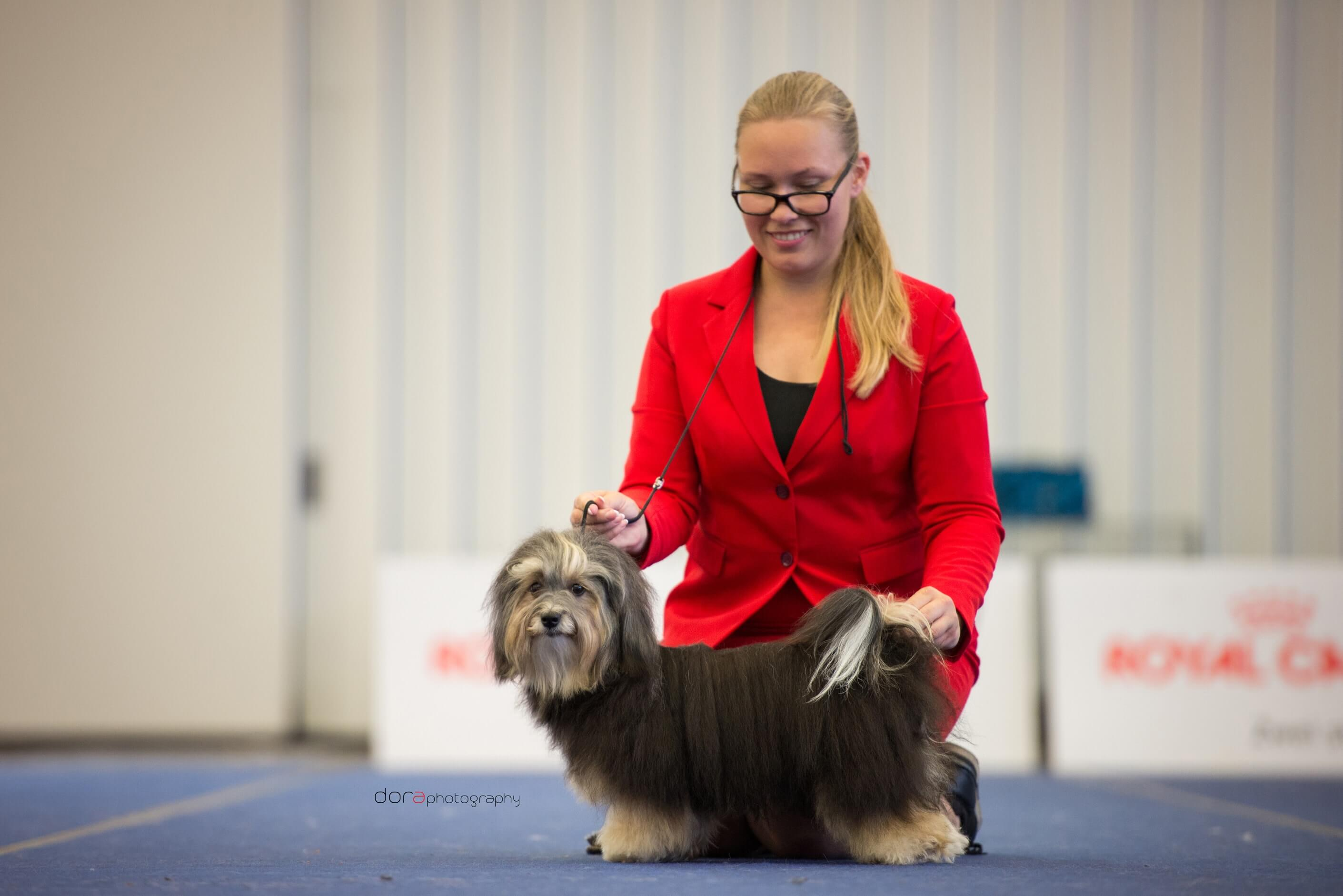 European Dog Show 2019, Wels - Austria, 16 June 2019