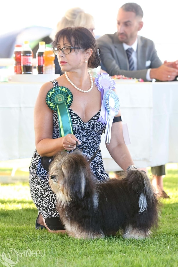 SKPP SPECIAL CLUB SHOW FOR TOY BREEDS AND POODLES, Rogla - Slovenia, 29 June 2019